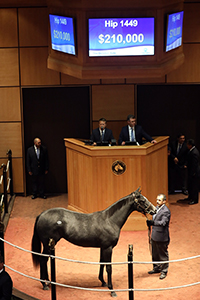 fasig-tipton october sale liam's map filly