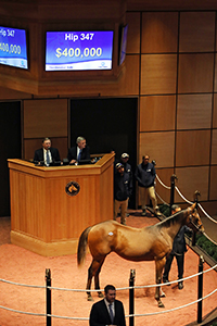 hip 347 fasig tipton october sale 2018