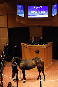 fasig-tipton october sale uncle mo filly